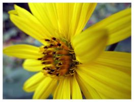 Yellow flower by Marzocchi05
