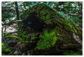 Old Growth by leocolgan