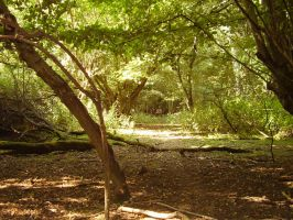 Hatfield forest 1 by pan77155