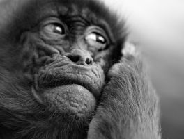 Cell phone monkey by Addran
