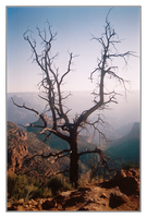 Grand Canyon - 18 - Crows Nest by michaeltoe