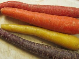 A Quartet of Colorful Carrots 2 by Windthin