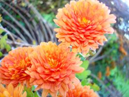 Fall Flowers by MischiefLily