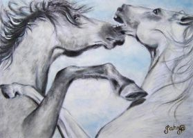 Clash of the Stallions by Tahnja