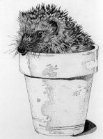 Project 02: Hedgehog in a Pot by Faeriedreamer