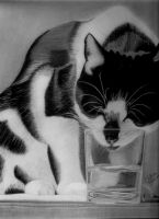CAT by chithra80