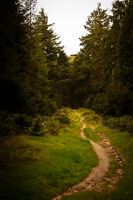Forest trail by DeborahBeeuwkes