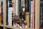 Tanita checking out my 'to read' shelf by 914four