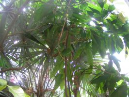 Palm Fronds and Leafy Branches by soluble-hermit
