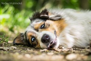 Smile please by aussiefoto