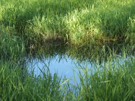 Pond 03 by Eltear-Stock