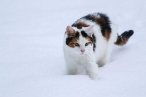 Kitty in the Snow by StacySPhotography