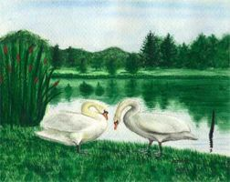 Swans by Jenileigh