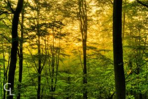 Forest sunrise by Goro38