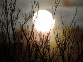 Moon with treebranches by MaxArceus