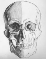 THF_skull2 by Horn-Findley