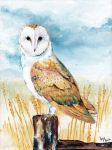 Barn Owl II by RatatoskAS