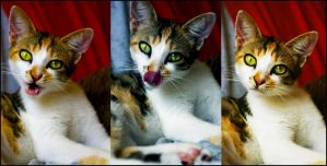 Kitty Collage by mandamick17