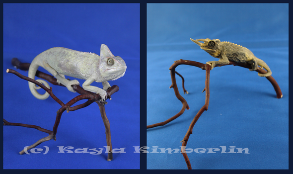 Etsy Taxidermy SALE: Chameleon by BluesCuriosities