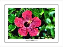 Tropical Hibiscus - HDR by TThealer56