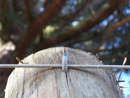 Wire Fence Post by BeckyHolly