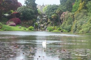 Swan at Sheffield Park Gardens by rinoa2530