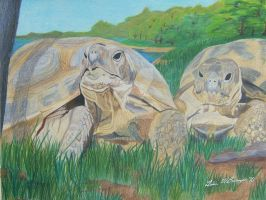 Turtles by WindSong83