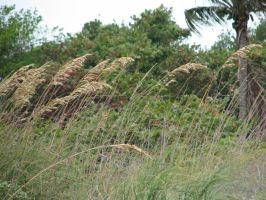00161 - Tropical Reeds by emstock