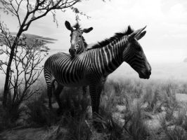Zebra Love by BeautifulMemoir