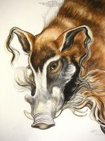 Red River Hog by HouseofChabrier