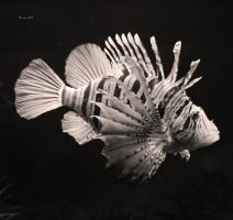 Lionfish by Lain-AwakeAtNight
