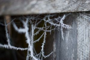 Icy web by DarthRoman