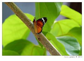 The New Year's Butterfly by gomes