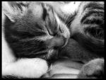 Sweet dreams little kitty by DrCaruso