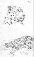 Snow Leopards1 by Imaginary-Shadow