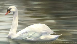 Swan Painting by Cindacry