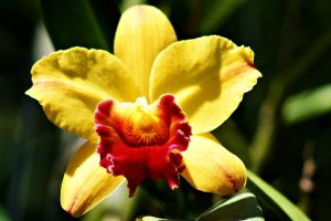 Orchid flowers 20 by a6-k