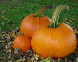 The Pumpkin Family 1280x1024 by euphoricallydead