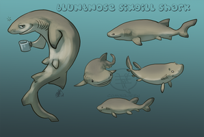 SHARK WEEK 2014 #2- Bluntnose Sixgill by comixqueen
