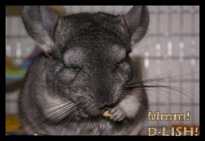 D- LiSh says the chinchilla by KatTheGrrreat-photo