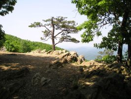 Tree growing from cliff by Rebecca329