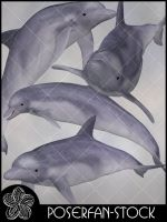 Dolphins 001 by poserfan-stock