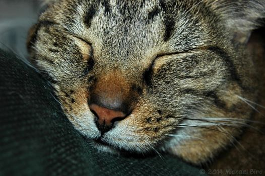 Snoozefest by HumaneFotos