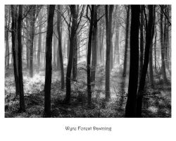 Wyre Forest Dawning by Capturing-the-Light