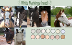 White Markings - Head by EdithSparrow