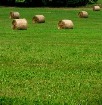 Hay by Fanciful24