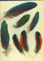 Feathers 1 by NicoleBarber