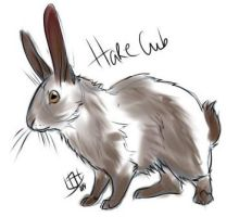 Hare by Khryphos