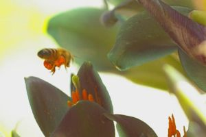Bee Feasting on Bromeliad by PatGoltz