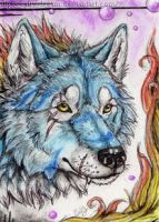 ACEO-Wolf-Minori by Cally-Dream